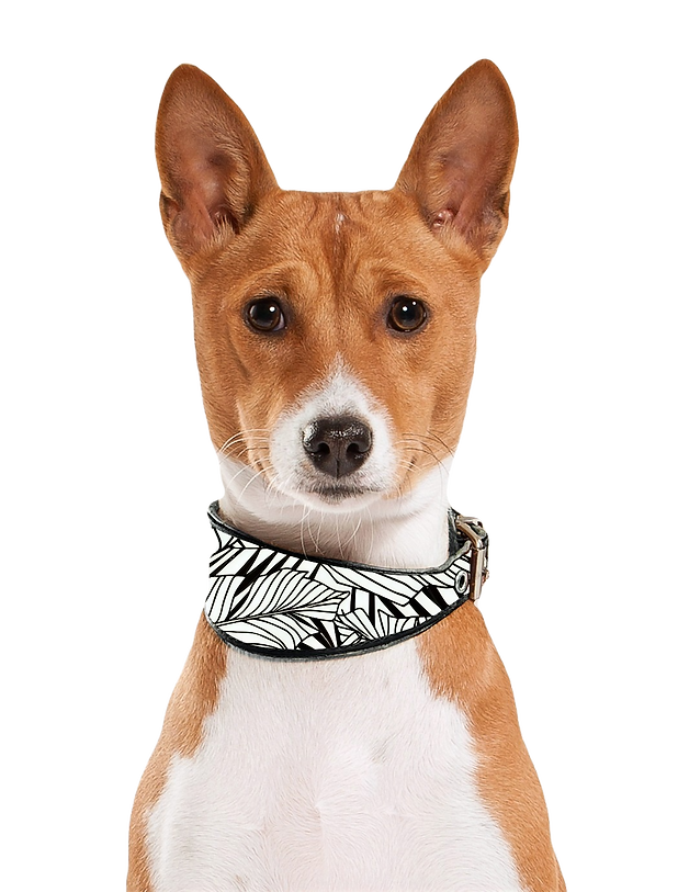 Dog Portrait_edited_edited.png