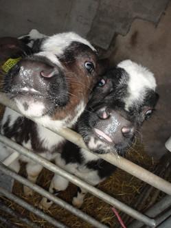 Meet The Farm Animals