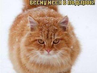 1 марта - День кошек.