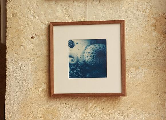 """FOND MARIN"" Photo cyanotype by LES PAPIERS BLEUS"