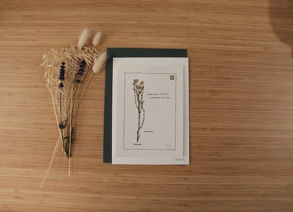 """""""IMPARFAIT"""" Collage herbier de LAURENCE PARIS"""