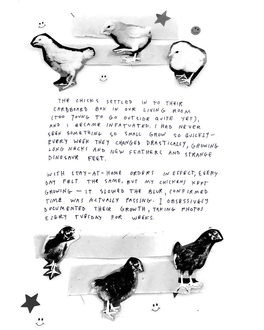 chick_habit_5.png
