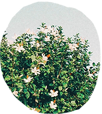 flowers-4.png