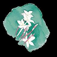 EMMA-SEELY-KATZ_jasminenearness.png