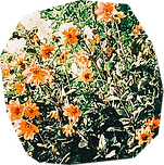 flowers-5.png