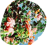 flowers-6.png