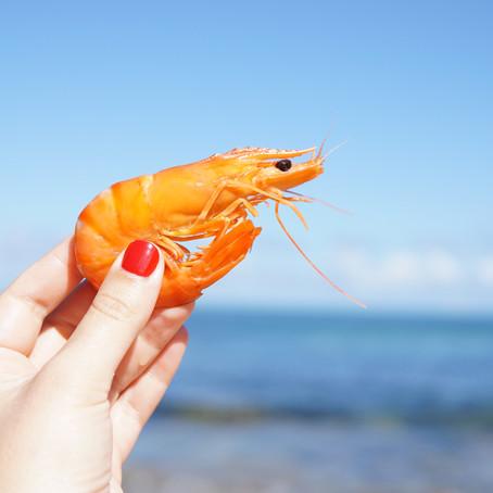 Shrimp Catching in Taiwan - Gotta Catch 'em All