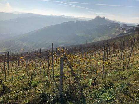 A visit to Le Langhe, Piedmont… part 1