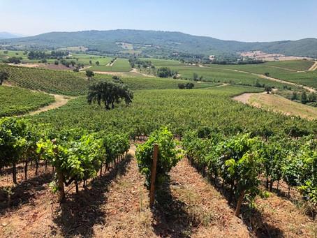 Grand Scale Vision, Grand Scale Players, Grand Scale Winery: Rocca di Frassinello