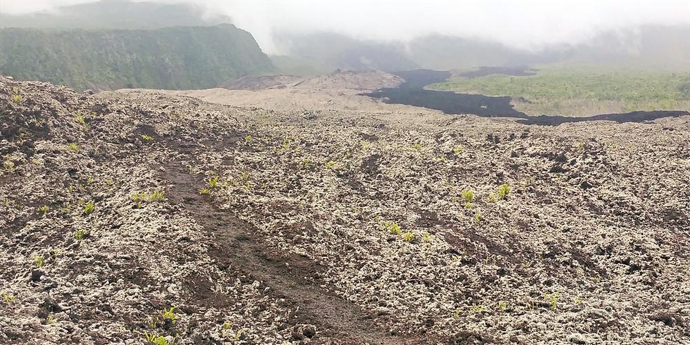 Photo de la coulée de lave de 2007 à l'île de la Réunion. Lichen recouvre la lave. Eruption du Piton de la Fournaise