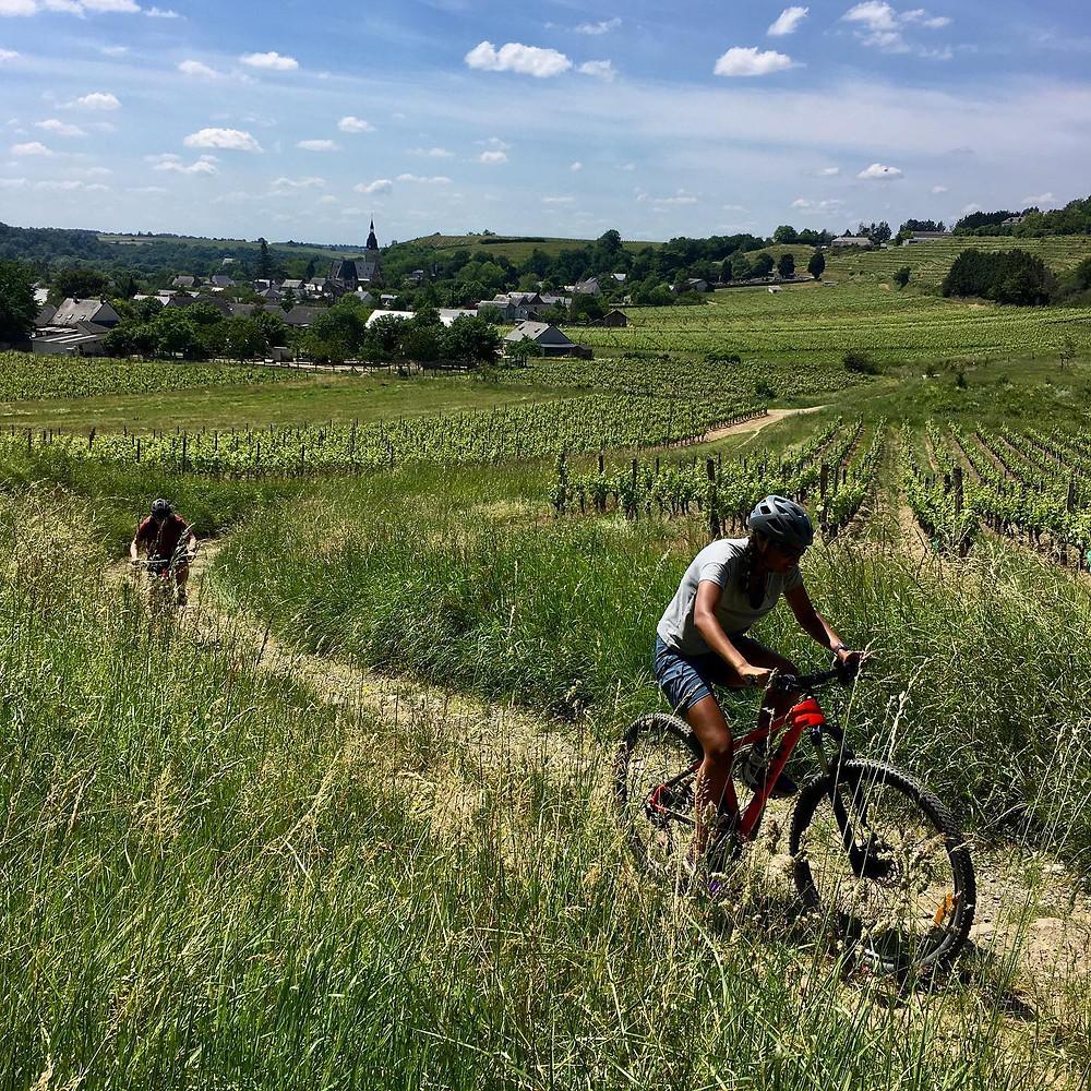 À VTT dans les vignes du Coteaux-du-Layon