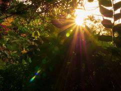 Lumière Tropicale