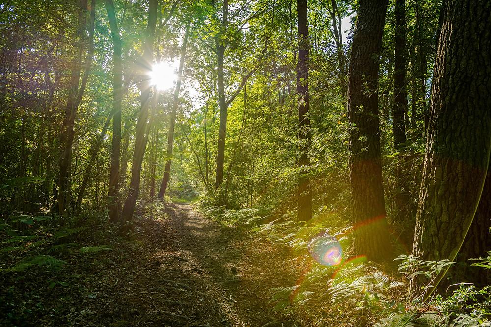 Coucher de soleil en forêt, les rayons du soleil traversent le feuillage