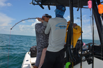 Goliath Grouper teamwork