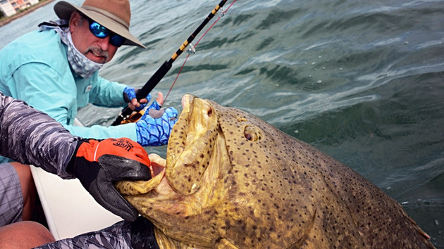 Go Goliath on Florida's Gulf Coast; Fish, Food, Fun in Sun - But Watch Out, These Fish can Hurt You!