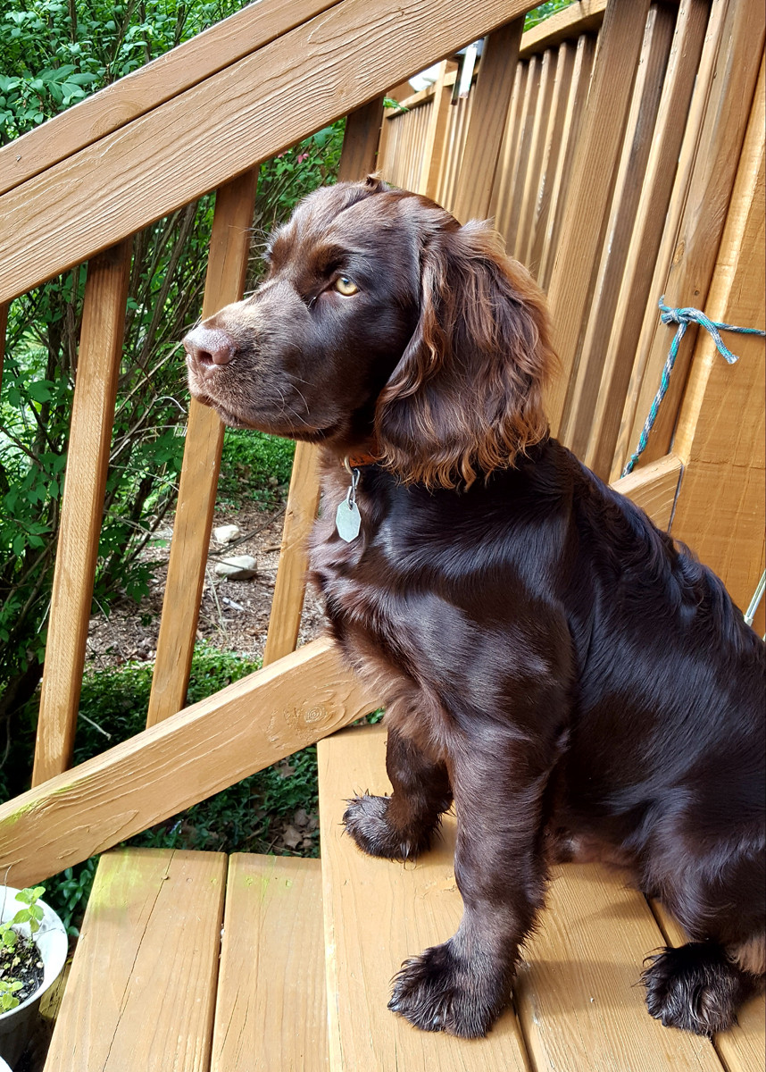 Jameson at 6 months, new Lord of the Manor