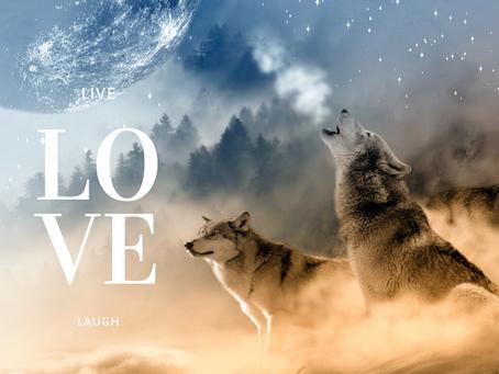 ⚜️Die 2 Wölfe