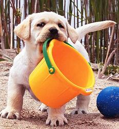Dog sand pale.jpg