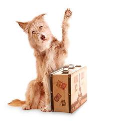 dog-with-paw-raised-1024x1024.jpg