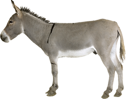 donkey_PNG45.png