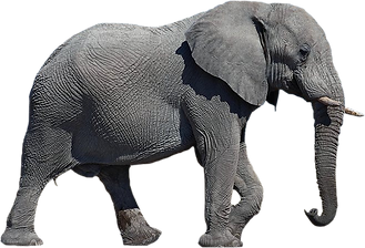 elephants_PNG18759.png