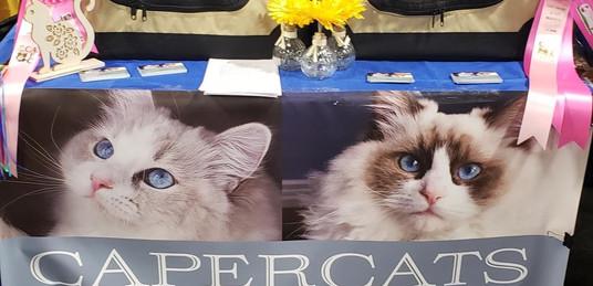 Ragdoll Cat Show