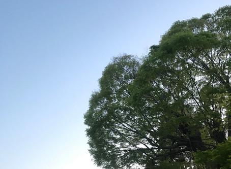 静岡県ネイルサロンは自粛?