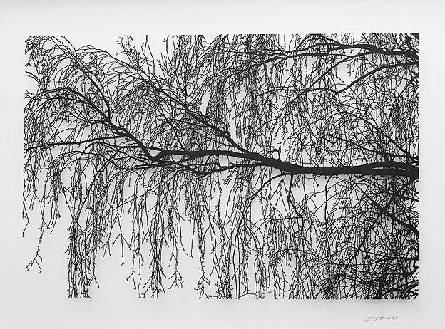 the birch.jpeg