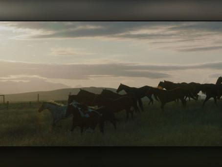 Calgary International Film Festival to showcase more Alberta films