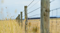 fence.webp