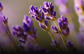 lavenderTablet.jpg