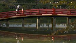 【7月17日】橋から見た景色最高です。