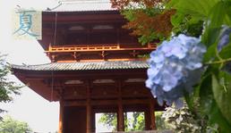 【7月17日】夏の高野山大好きです。
