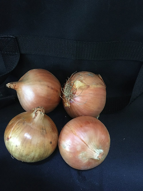 English Onions - Bag of 4