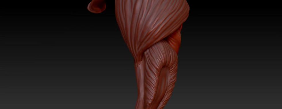 Turntable 4 progress: Deltoid and Triceps brachii