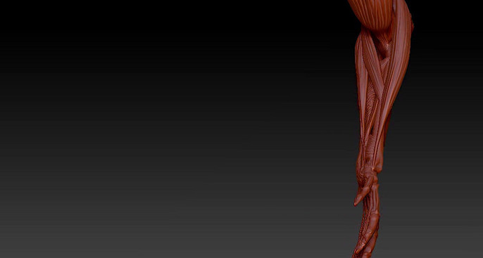 Turntable 8: Anterior compartement forearm