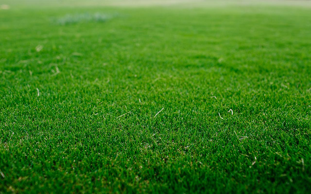 Lawn Love