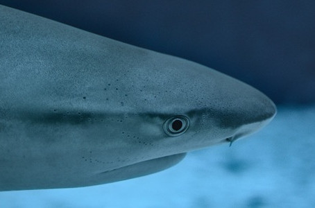 A Shark Attack Raises the Question: What Are the Greatest Risks Outdoors?