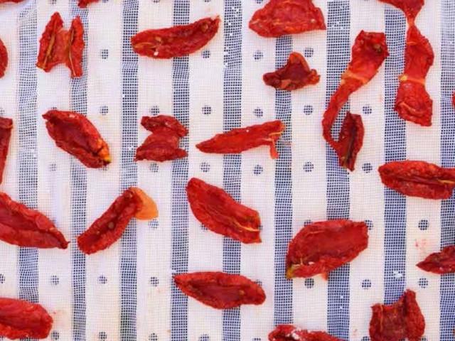Sušena rajčica