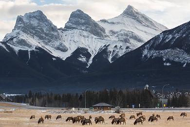 Mountains background image