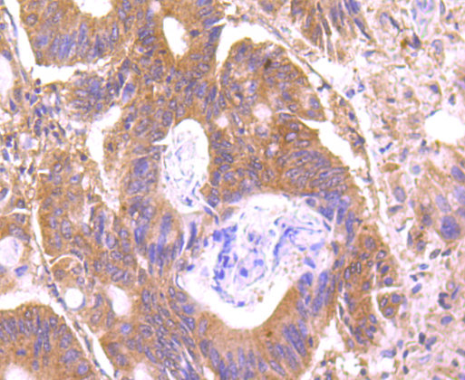 C14orf93 Mouse monoclonal Antibody IgG1
