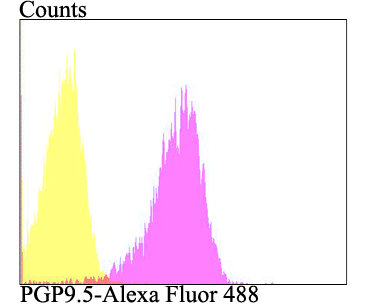 PGP9.5 Mouse monoclonal Antibody IgG2a