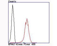 KPNA2 Recombinant Rabbit monoclonal Antibody IgG