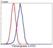 Chromogranin A Rabbit polyclonal Antibody IgG