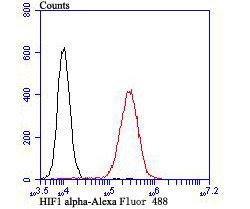 HIF1 alpha Rabbit polyclonal Antibody IgG