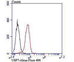 USP7 Recombinant Rabbit monoclonal Antibody IgG