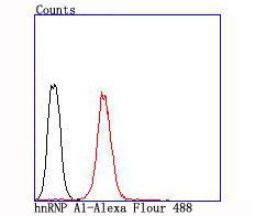 hnRNP A1 Recombinant Rabbit monoclonal Antibody IgG
