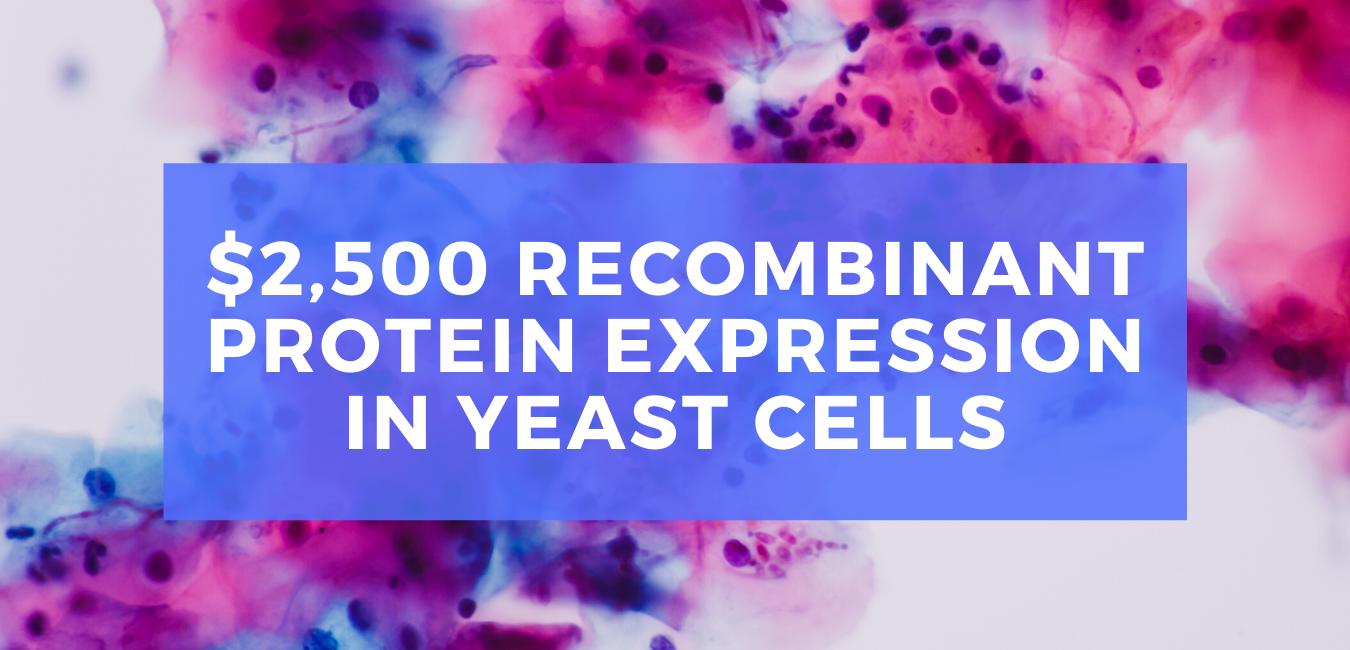 $2500 Yeast Promo Web Banner