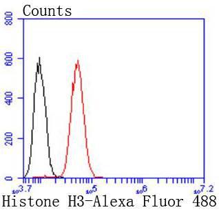 Histone H3 Recombinant Rabbit monoclonal Antibody IgG