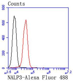 NLRP3 Recombinant Rabbit monoclonal Antibody IgG